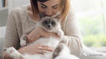 Mercola医生告诉您:这十件事可能会让您的猫咪感到压力