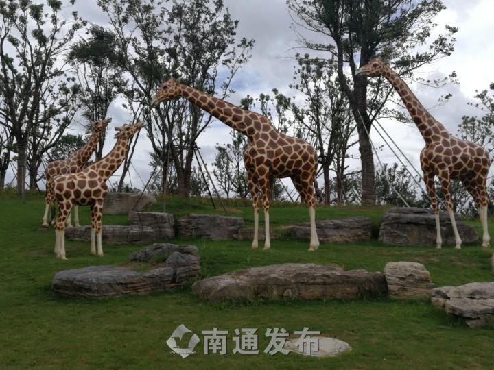 南通森林野生动物园承诺:全年执行成人150元票价