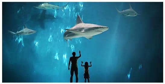 鲨鱼身体结构示意图