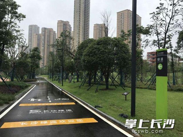 雨花区今年将新(改)建自行车道58.8km 这些路段有分布