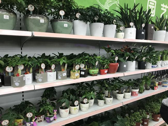 """花草植物帶上二維碼""""身份證"""",萬植通植物標牌受歡迎"""