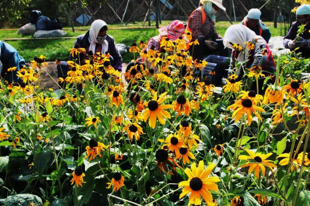 国庆期间 西宁第一座沟谷公园苦水沟公园正式开放
