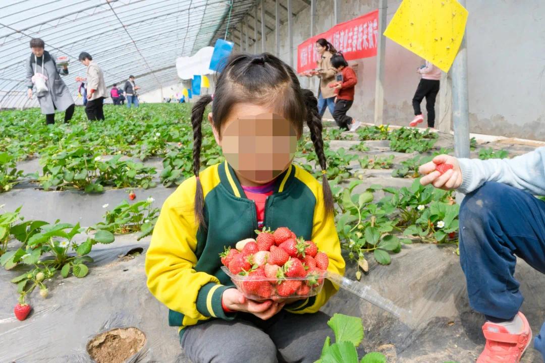 """悦享春光,""""莓""""好同行 澜铂湾业主采摘节圆满落落幕!"""