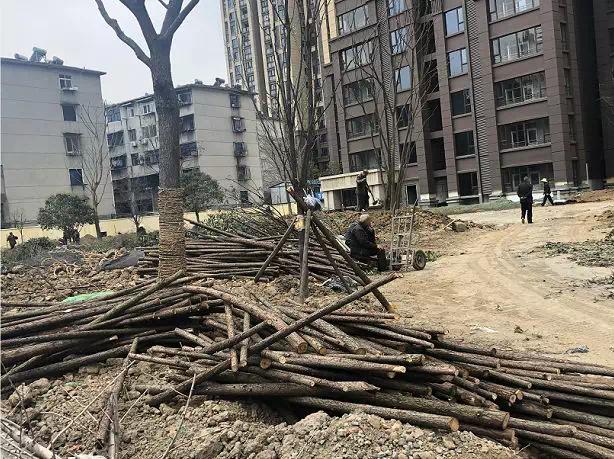融侨锦江二期|4月工程进度 不负春光不负卿