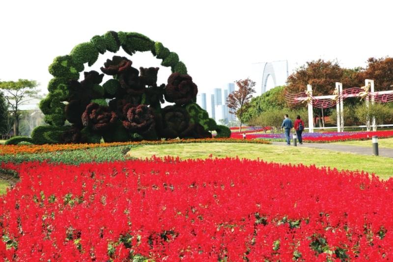 """环金鸡湖畔今起""""四季有花"""" 绿化景观提升改造工程基本完成"""