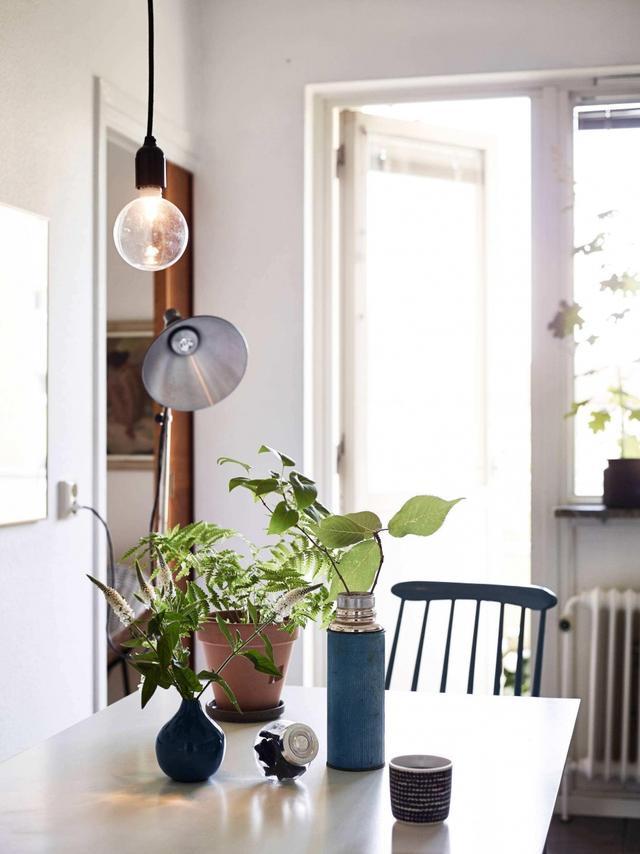 绿植是家里最好的软装师