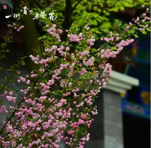 一街青黛半巷花――玖和园