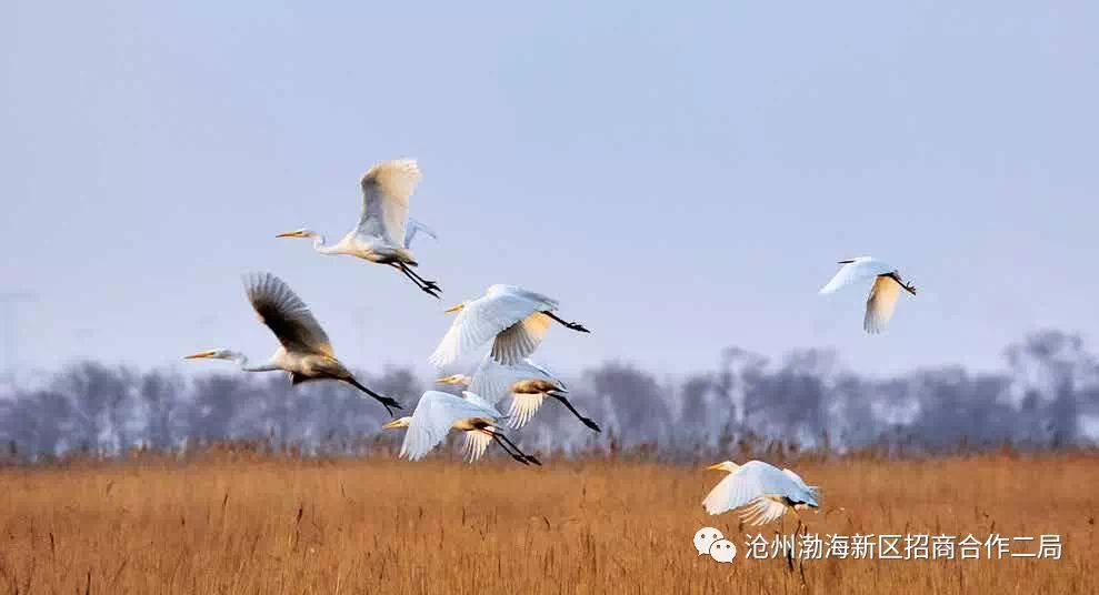 沧州欧洲风情小镇、海上旅游休闲平台、东渡码头欢乐谷等项目开启