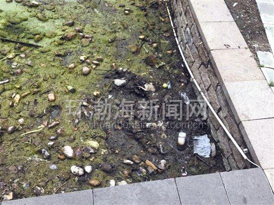 唐山梧桐大道小区居民:物业管理混乱伤透了业主的心