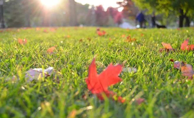"""东方紫苑:在这条归家之路,幸遇""""向往的生活"""""""