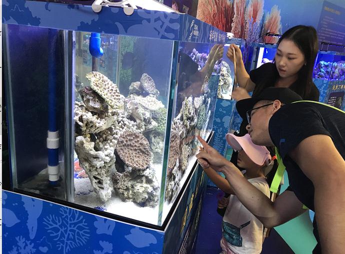 珊瑚科普展免費 20多個展柜帶你走進珊瑚奇妙世界