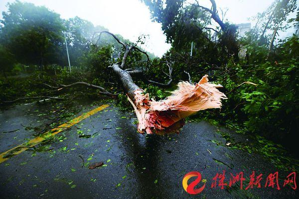 """台风""""山竹""""对株洲基本无影响 市区最高温34℃"""