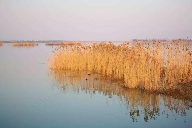 颐德有约丨山湖之间,一场关于艺术的探索