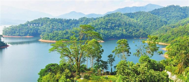 中山构建起城市森林生态系统,市域森林覆盖率达35.48%