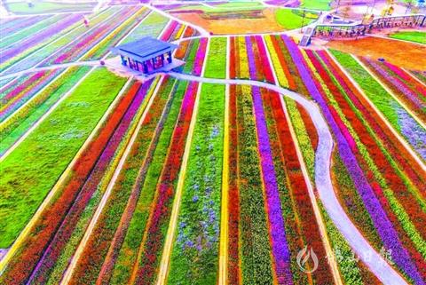 高明大力实施乡村振兴战略 农旅迎来全新发展机遇