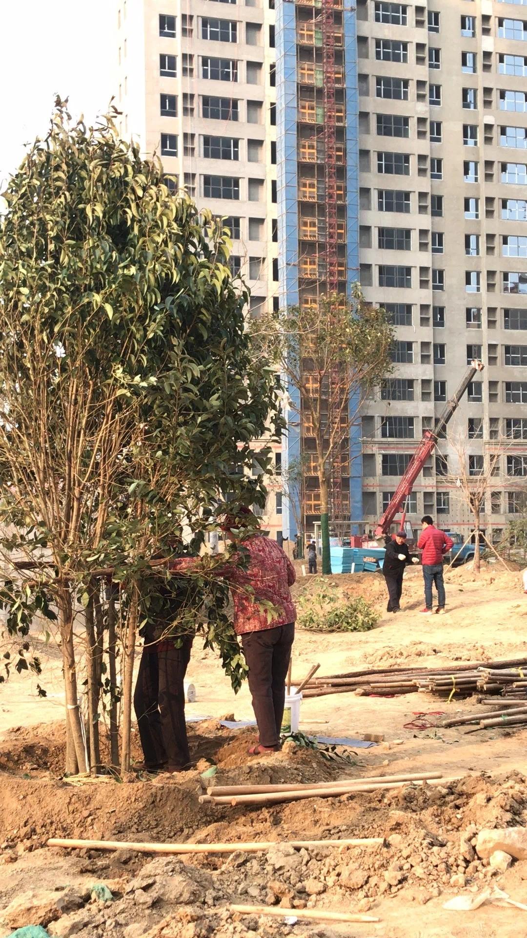 大业•锦绣阳光城工程进度播报【家书抵万金】