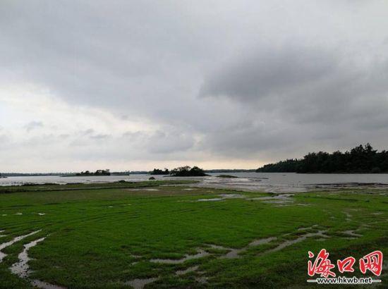 多措并舉加強濕地保護 海口瓊山擬建4個濕地公園