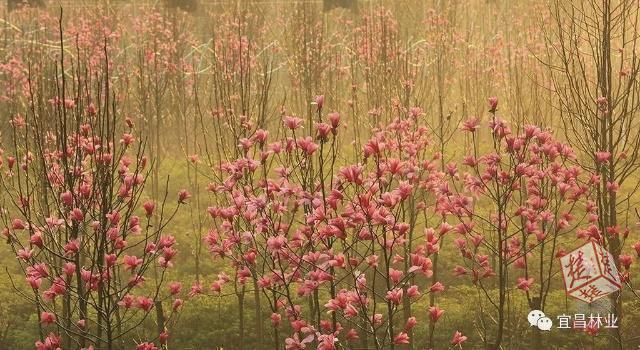 厉害了!宜昌森林覆盖率位居湖北省市州第一