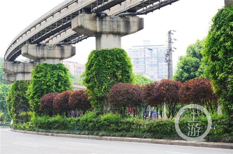 """重庆城市绿化""""放大招"""" 主城区309个坡坎崖将变美!"""