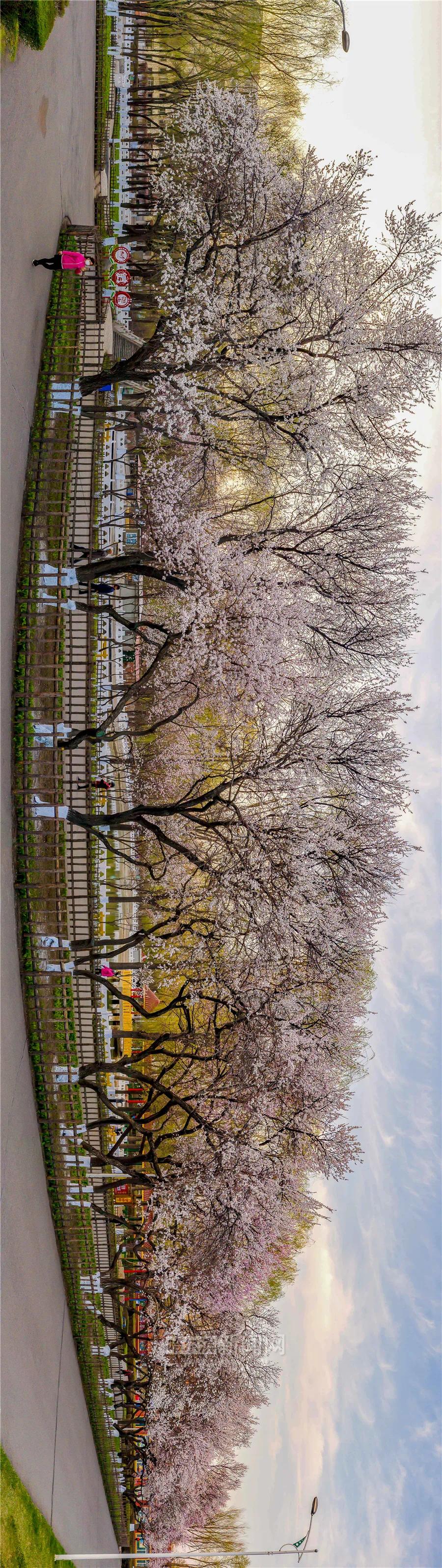 阿城市会宁公园_植物园、文化公园将免费开放 还要新增10个公园(游园)-哈尔滨 ...