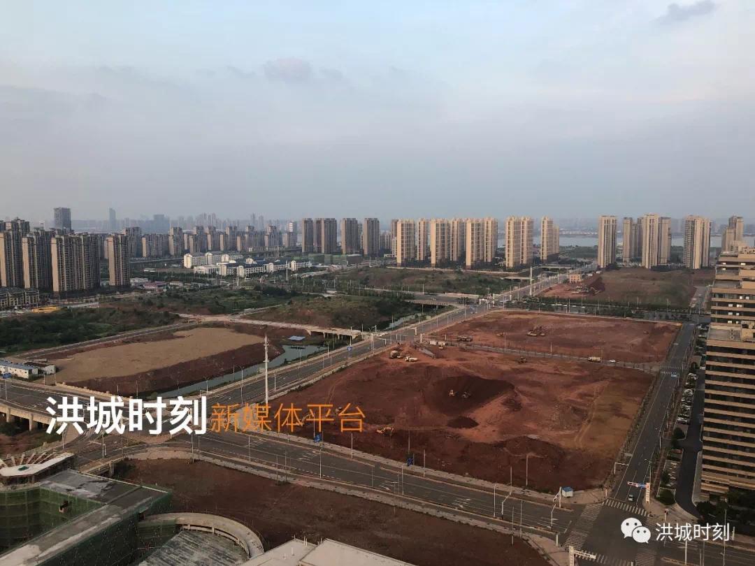 九龙湖新城翔龙路交通详细规划公示!区域内70条道路将进行绿化