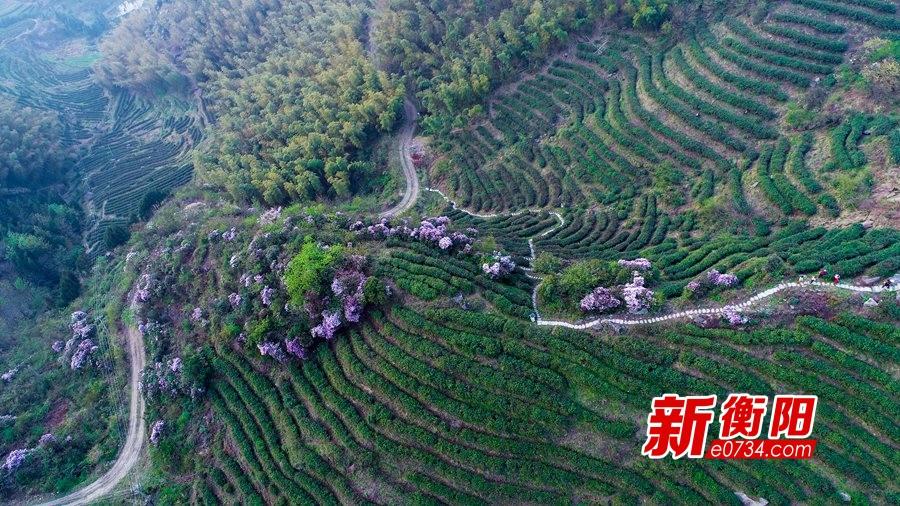 """南岳区被评为2018湖南茶叶""""千亿产业十强县"""""""