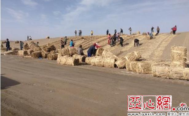 乌鲁木齐至尉犁公路沙漠段路基施工完成过半