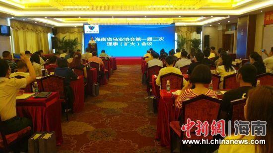 海南省马业协会未来将建马文化交流中心