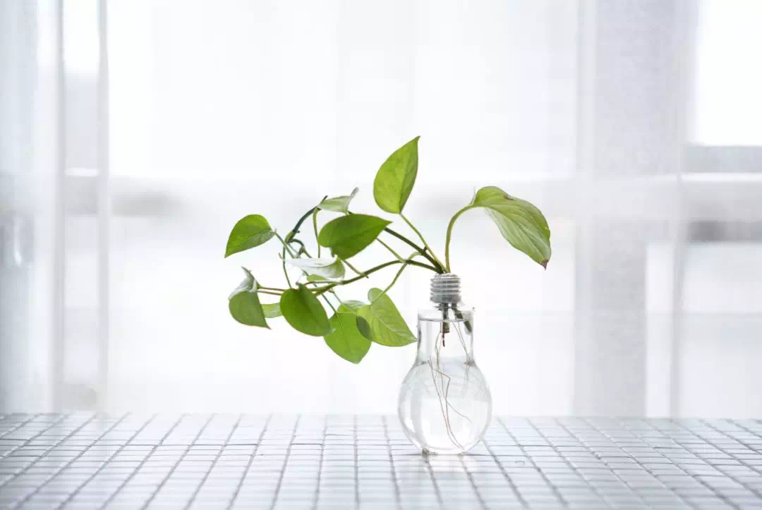 装修 | 卧室放什么绿植最好?