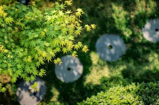 禅居茶道丨玖和园的清养,才是仲夏应有的样子