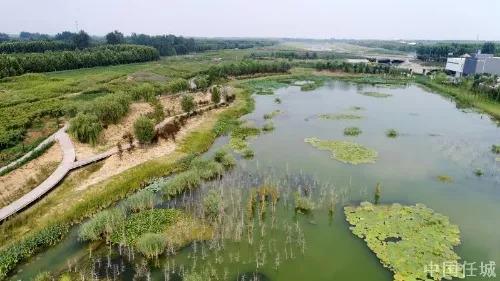 改善济宁水质安全,任城区完成819亩京杭运河入湖口湿地修复