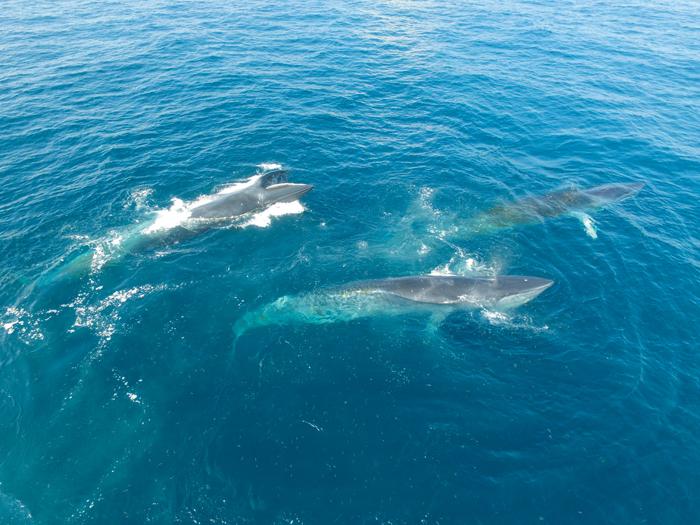 """北海市近年来""""鲸现涠洲""""已成渔民群众常见的美景"""