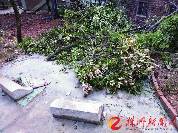 砍伐多棵香樟、桂花树 竹山小区毁绿建车位可行吗?