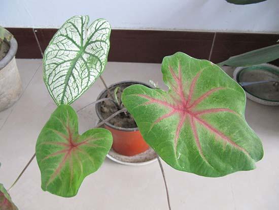 装修百科 | 植物界的空气净化大师