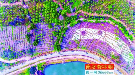 西樵被认定为2018年广东省森林小镇