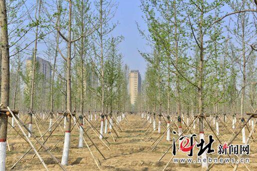 河北省今年已完成营造林326.9万亩