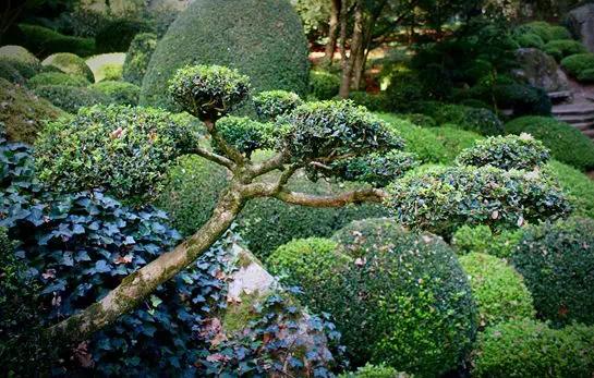 住在碧桂园•天樾湾,生活是与自然在恋爱!!