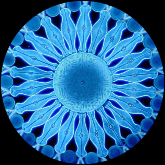蓝天豚硅藻泥【深海明珠】系列产品名字的由来