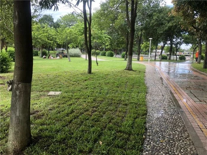 """这个被称为""""家门口的公园""""再次换装!秋日里的绿意,元气满满…"""