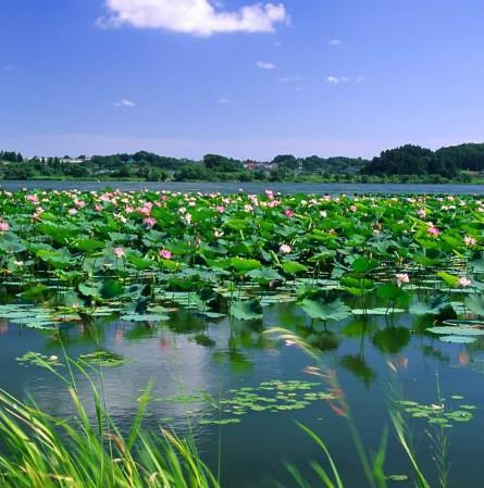 全国最热门的十大红色旅游景区公布,白洋淀景区上榜