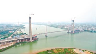 南沙港铁路跨西江斜拉桥再传捷报 60多层楼高主塔成功封顶