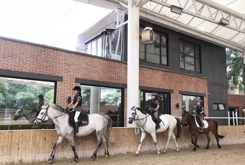 报名!2019威森荷兰皇家马术营又双����将开启!