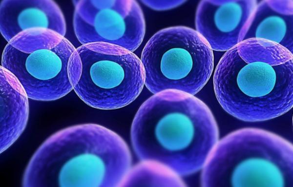 株洲将建干细胞产业园 计划投资20亿/为湖南唯一干细胞存储库