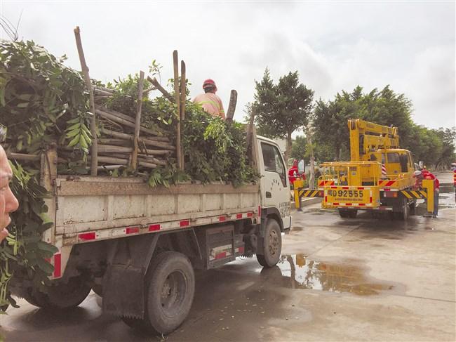 城区路道洁净树木青葱  城管部门全力清障排险基本消灭灾痕