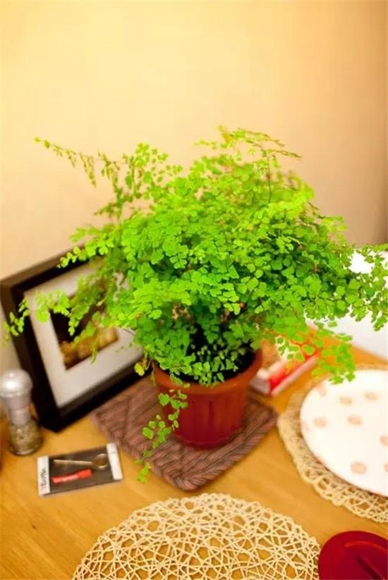 """七款""""吸毒""""植物,室内的天然空气净化器"""