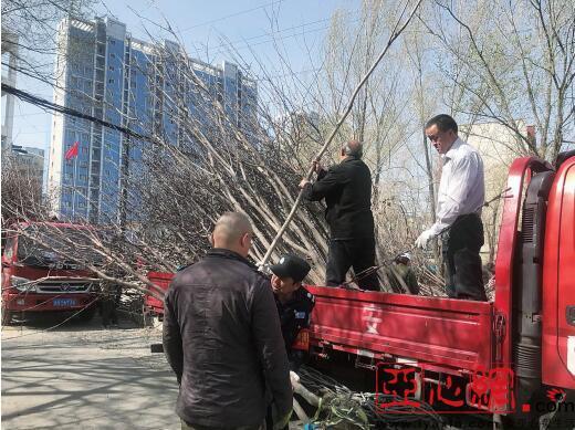 乌鲁木齐市天山区向居民赠送苗木